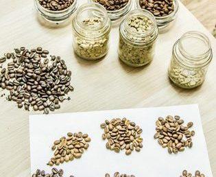 От ростка до чашки (все о кофе)