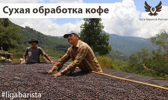 Что такое сухая обработка кофе