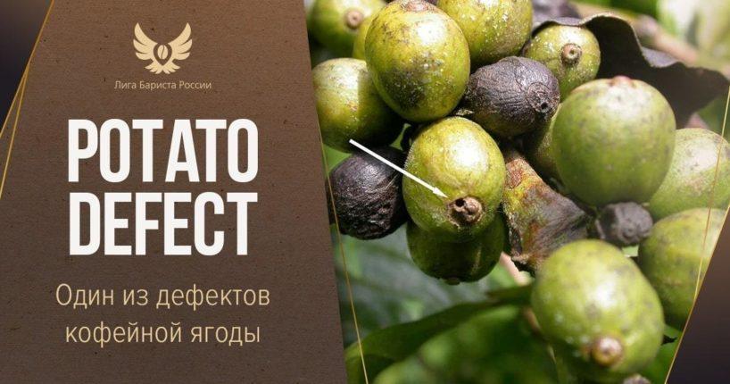 Potato defect. Один из дефектов кофейной ягоды