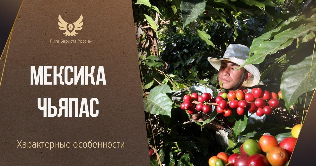 Кофе Мексика Чьяпас
